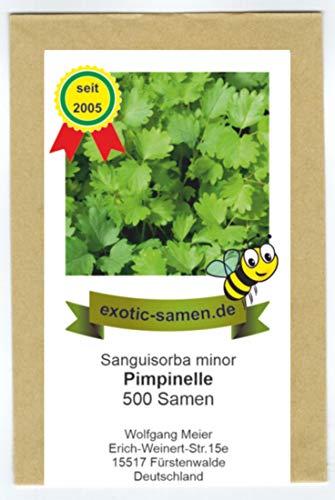 Pimpinelle, Gartenpimpinelle - Bienenweide - kleiner Wiesenknopf -...