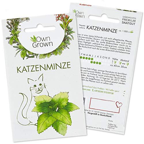 OwnGrown Katzenminze Samen für Katzen: Premium Katzenminze Saatgut...