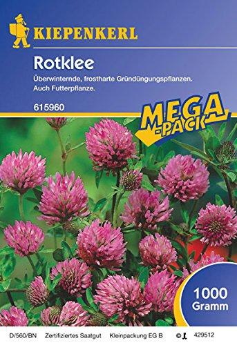 Rotklee - 1 kg Gründünger Mega-Pack
