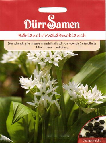 Dürr Samen 0071 Bärlauch/Waldknoblauch (Bärlauchsamen)