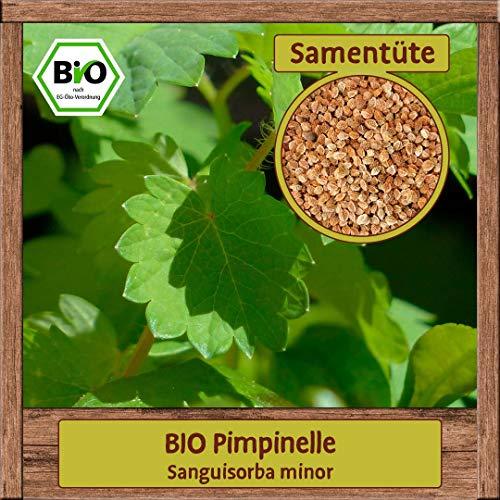 Samenliebe BIO Kräuter Samen Pimpinelle (Sanguisorba minor) | BIO...