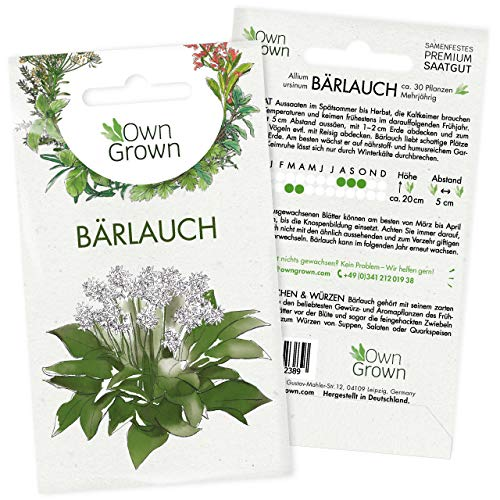 Bärlauch Samen: Premium Bärlauch Saatgut für die Anzucht von ca. 30...