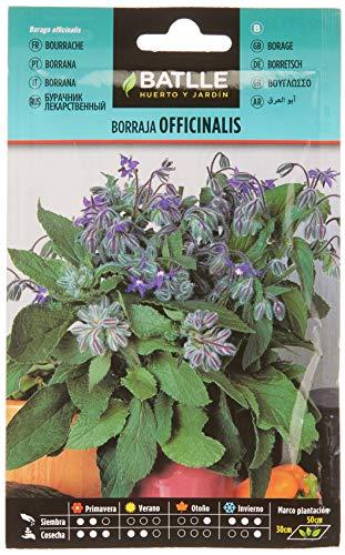 Batlle Kräutersamen - Borretsch Officinalis (Samen - 50cm)...
