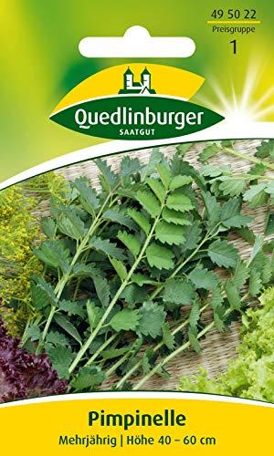 Pimpinelle Quedlinburger Saatgut Samen 495022