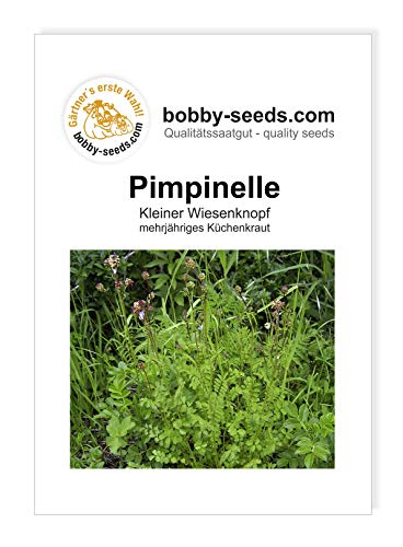 Bobby-Seeds Kräutersamen Pimpinelle Portion