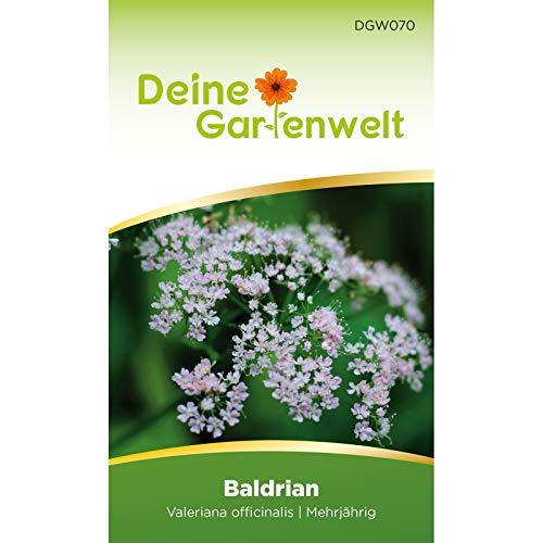 Baldrian Samen | Valeriana officinalis Saatgut | Baldriansamen