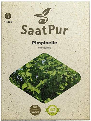 SaatPur Pimpinelle Samen, Saatgut für ca. 90 Pflanzen