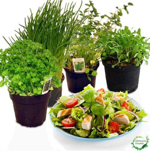 Salatkräuter-Set, 4 Frische Kräuter Pflanzen, Schnittlauch, Rucola,...