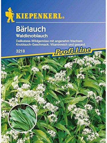 Bärlauch-Saatgut: Bärlauch / Waldknoblauch, Allium ursinum - 1...