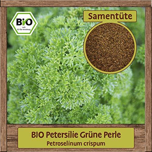 BIO Petersilie Samen Sorte Grüne Perle (Petroselinum crispum)...
