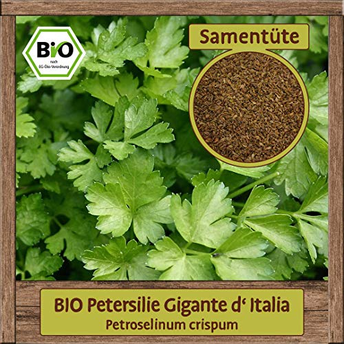 BIO Petersilie Samen Sorte Gigante D'Italia galtte italienische...